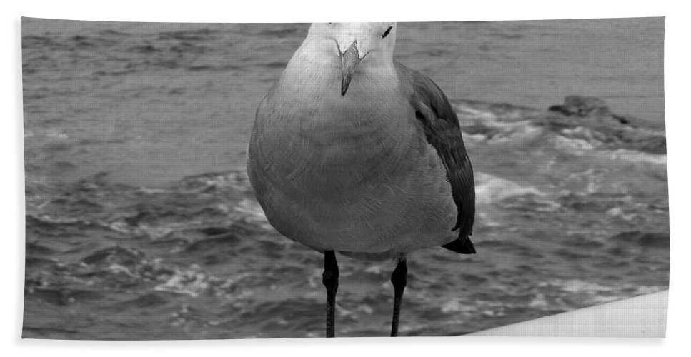 Water Foul Bath Sheet featuring the photograph The Seagull by Richard J Cassato