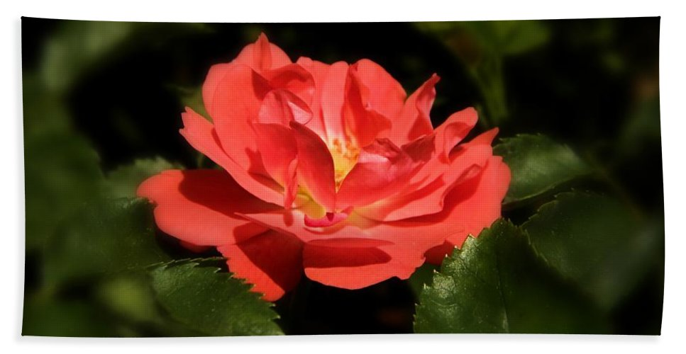 Rose Bath Sheet featuring the photograph The Secret Rose by Sharon Woerner