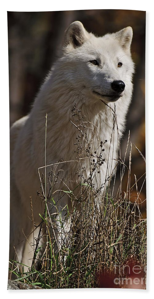 Arctic Wolf Photography Hand Towel featuring the photograph The Sentinel by Wolves Only