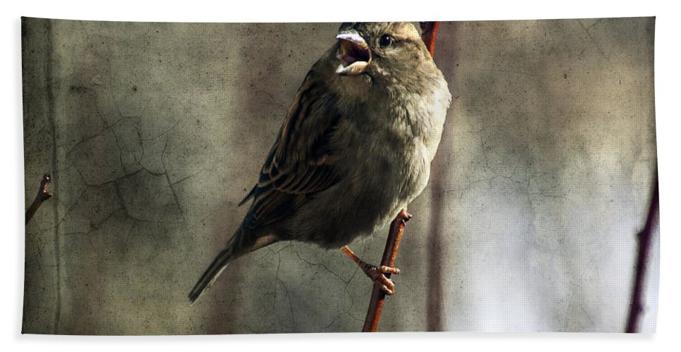 Sparrow Hand Towel featuring the photograph The Singing Sparrow by Janice Pariza