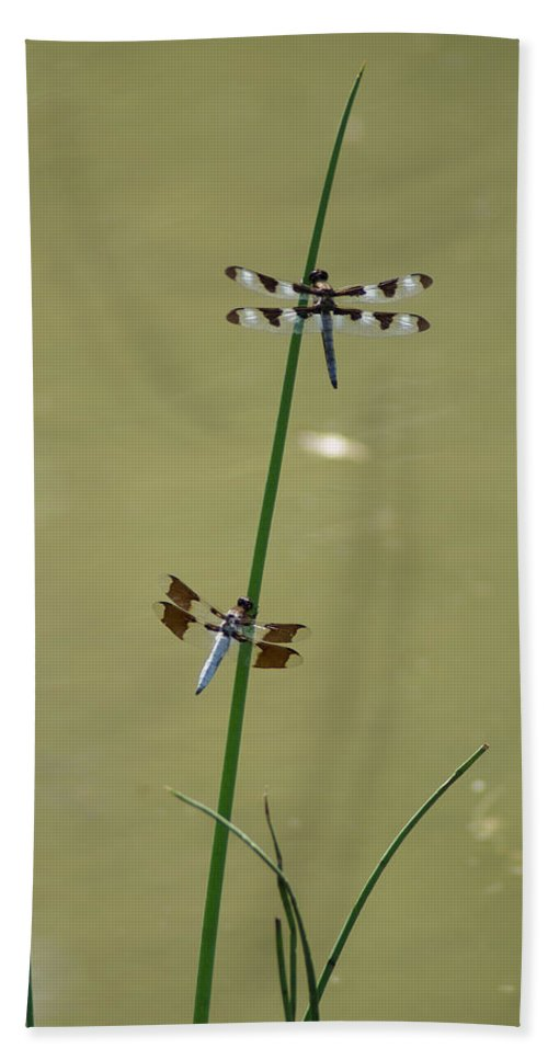 Dragonflies Bath Sheet featuring the photograph The Skimmer And The Whitetail by Ben Upham III