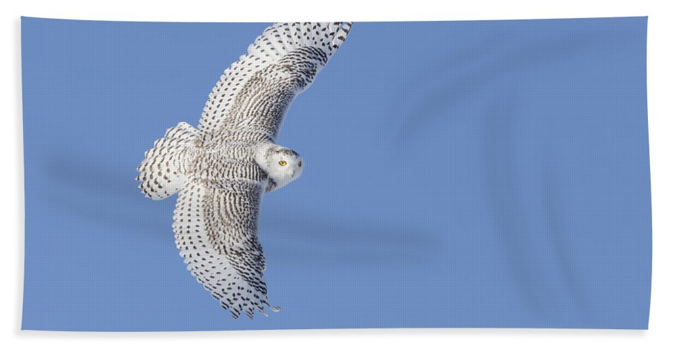 Angel Hand Towel featuring the photograph The Snowy Hunter by Mircea Costina Photography