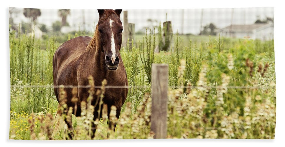 Horse Hand Towel featuring the photograph The Stare by Scott Pellegrin