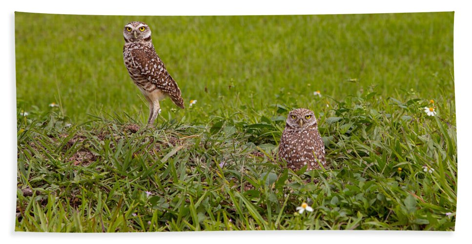 Birds Hand Towel featuring the photograph The Stares Of The Burrowing Owls by John M Bailey