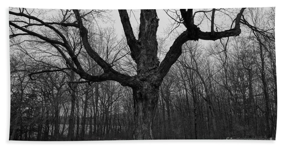 Trees Bath Sheet featuring the photograph The Tree In The Park by Jacqueline Athmann
