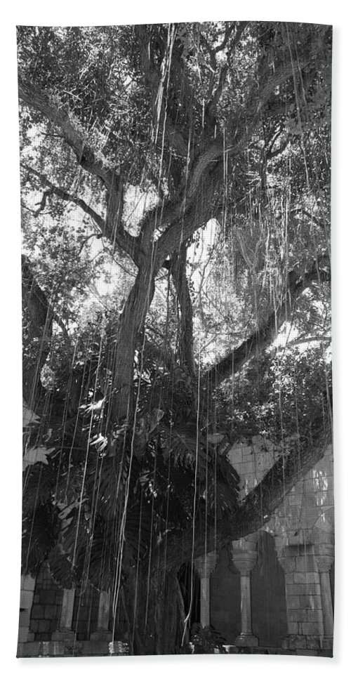 Black And White Bath Towel featuring the photograph The Tree Vines by Rob Hans