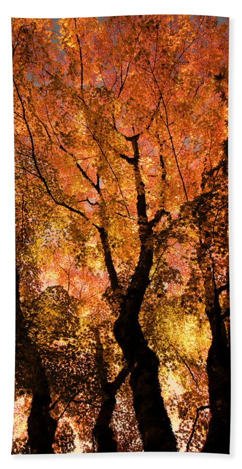 Maple Bath Sheet featuring the photograph The Trees Dance As The Sun Smiles by Don Schwartz