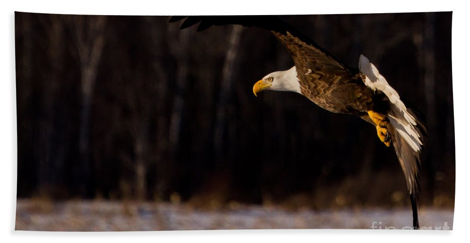 Eagle Hand Towel featuring the photograph The Turn by Jan Killian