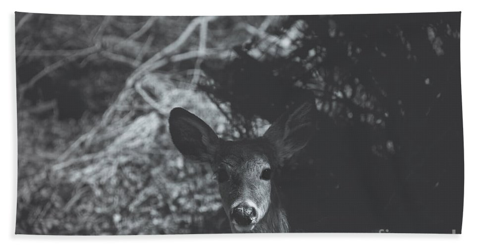 Deer Hand Towel featuring the photograph The Visitor by Bethany Helzer