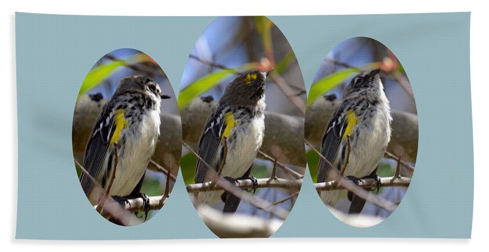 The Warbler Bath Sheet featuring the photograph The Warbler by Maria Urso