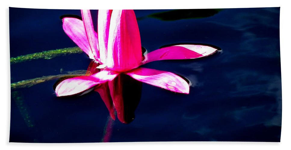 Flora Hand Towel featuring the photograph The Water Lily... by Tim Fillingim