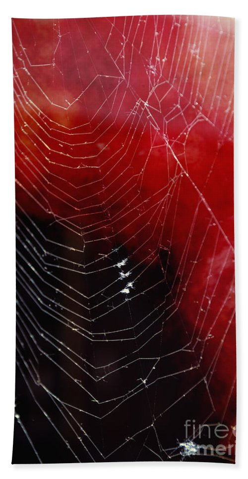 Web Hand Towel featuring the photograph The Webs We Weave by Margie Hurwich