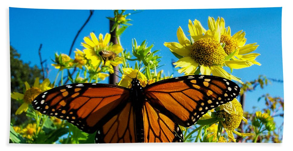 Butterfly Bath Sheet featuring the photograph The Wonderful Monarch 3 by Shannon Story