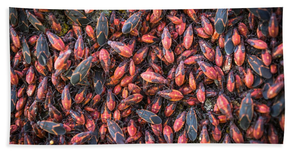 Insect Bath Sheet featuring the photograph Thick As Thieves by Bill Pevlor