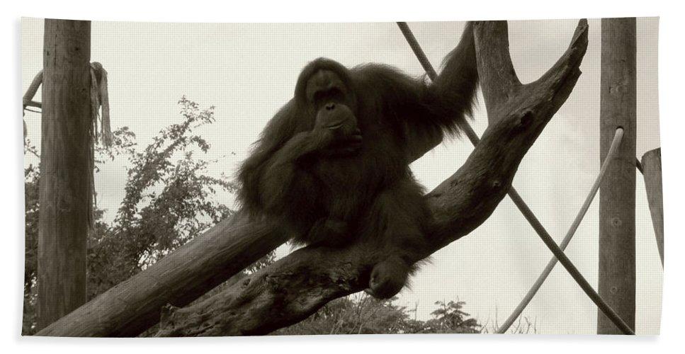 Orangutang Bath Sheet featuring the photograph Thinking Of You Sepia by Joseph Baril