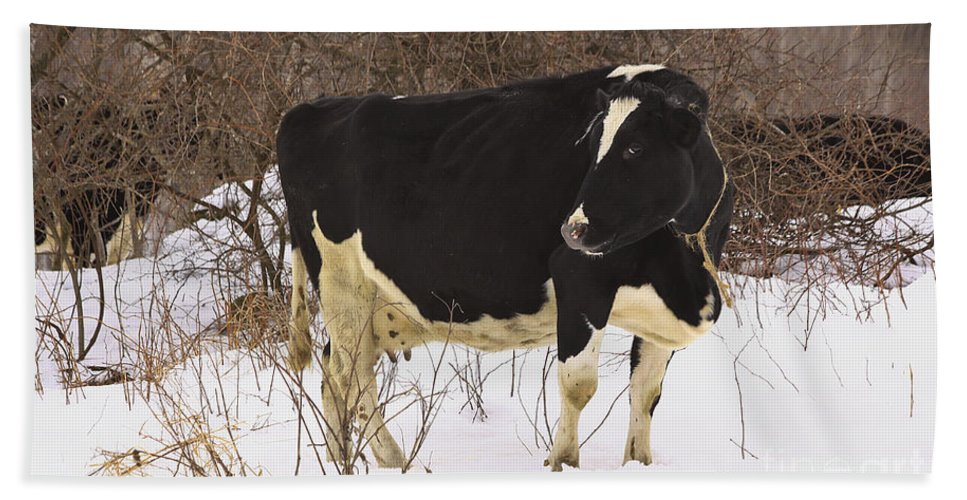 Winter Hand Towel featuring the photograph This Is My Good Side by Deborah Benoit