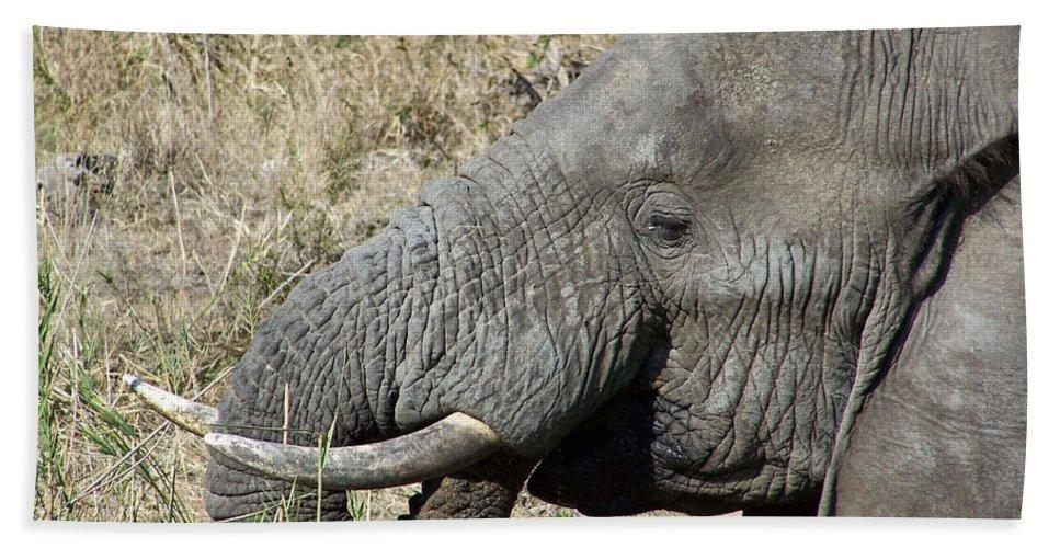 Elephant Bull Bath Sheet featuring the photograph This Tastes Good by Douglas Barnard