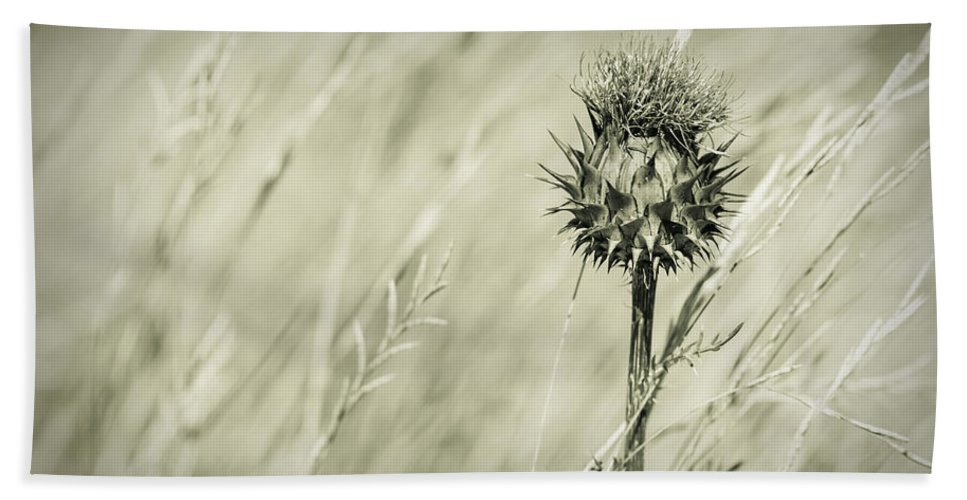 Thistle Bath Sheet featuring the photograph Thistle - Dreamers Garden Series by Marco Oliveira