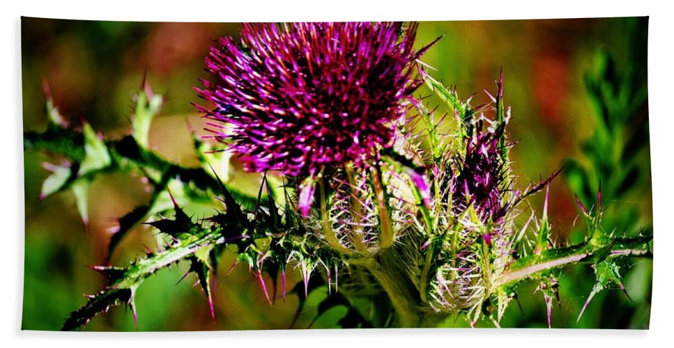 Thistle Bath Sheet featuring the photograph Thistle by Tara Potts