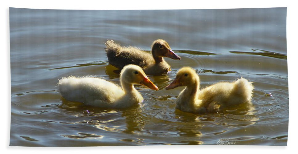 Baby Bath Sheet featuring the photograph Three Baby Ducks Swimming by Diana Haronis