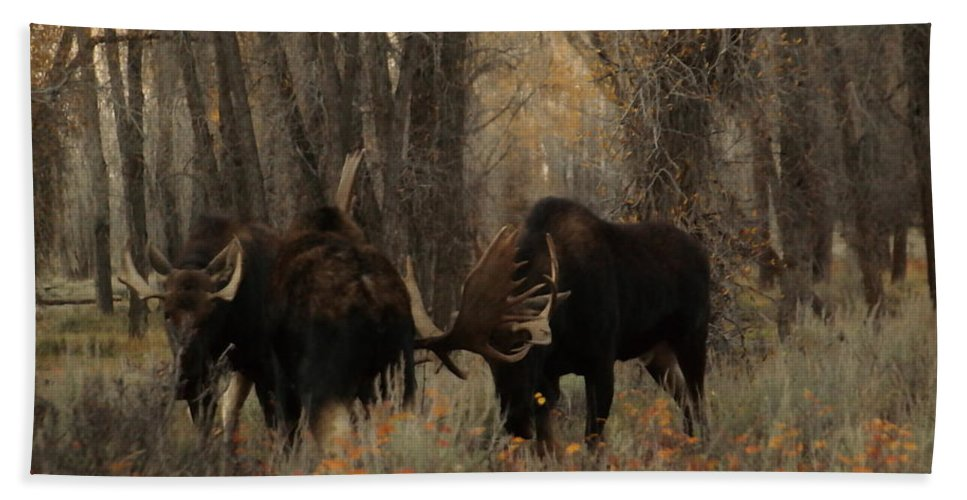 Moose Hand Towel featuring the photograph Three Bull Moose Sparring by Jeff Swan