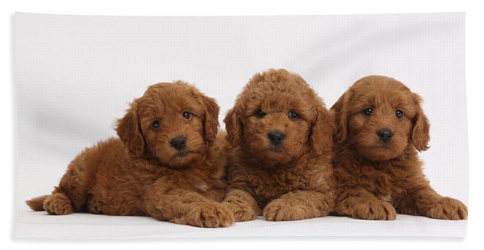 Three Cute Red F1b Goldendoodle Puppies Bath Towel