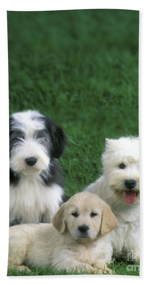 Dogs Bath Sheet featuring the photograph Three Diffferent Puppies by Jean-Michel Labat