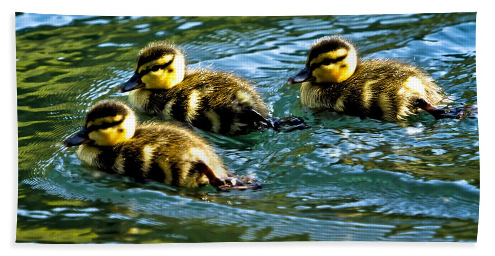 Duckling Hand Towel featuring the photograph Three Ducklings by Belinda Greb
