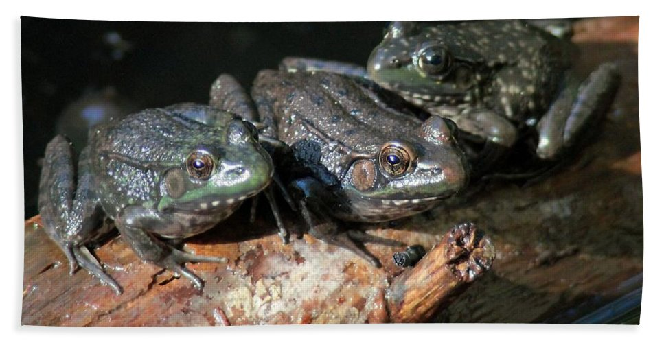 Bud Hand Towel featuring the photograph Three Musketeers by Kenny Glotfelty