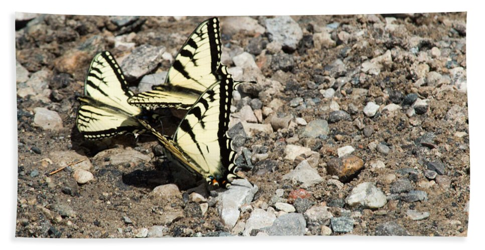 Swallowtail Hand Towel featuring the photograph Three Of A Kind by Linda Kerkau
