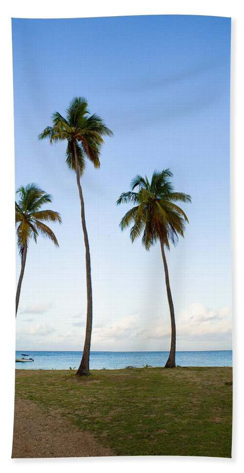 Antigua And Barbuda Bath Sheet featuring the photograph Three Palms by Ferry Zievinger