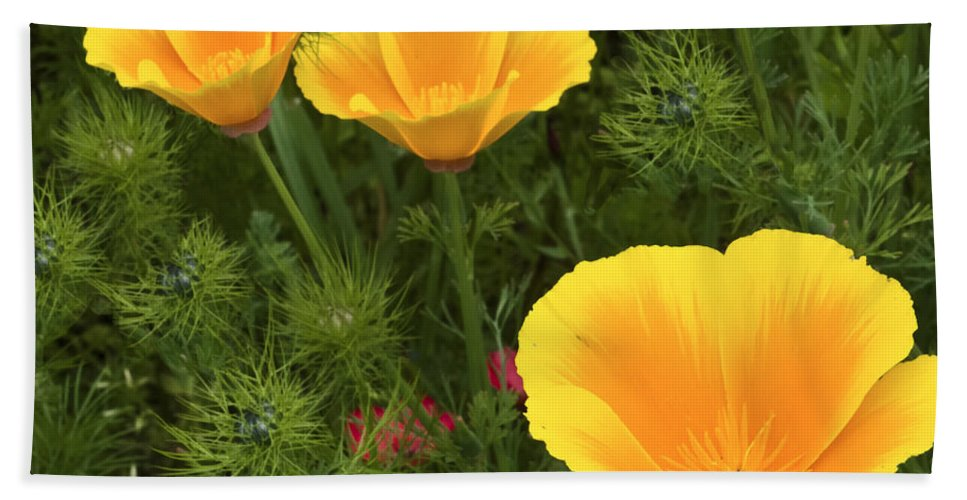 Poppy Bath Sheet featuring the photograph Three Poppies by Mike Nellums