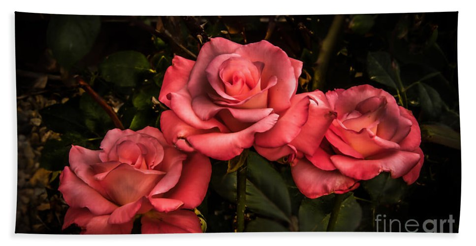 Perennial Hand Towel featuring the photograph Three Roses by Robert Bales