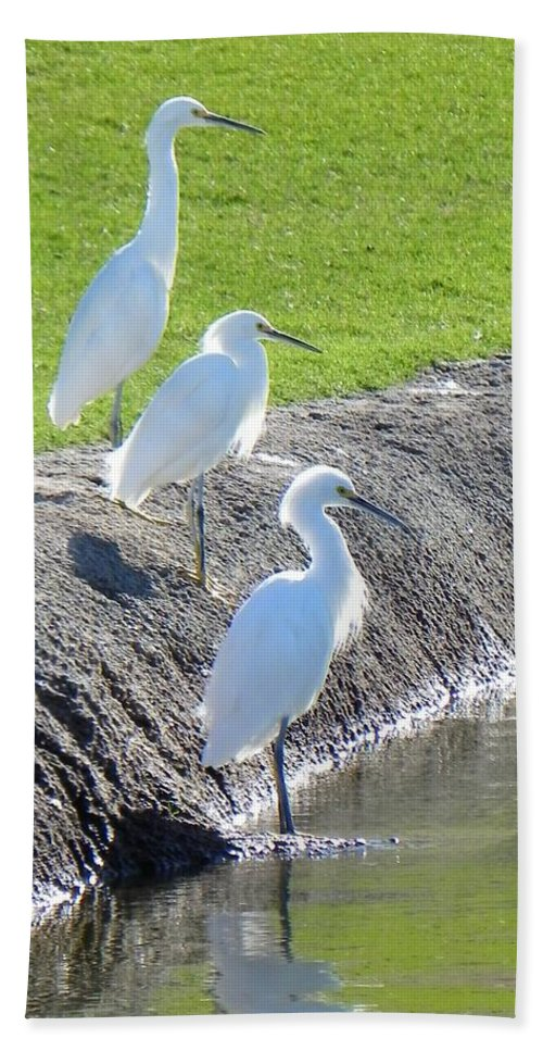 Egret Hand Towel featuring the photograph Three Stooges by Deb Halloran