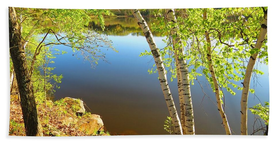 Calm Water Hand Towel featuring the photograph Through The Birch by MTBobbins Photography