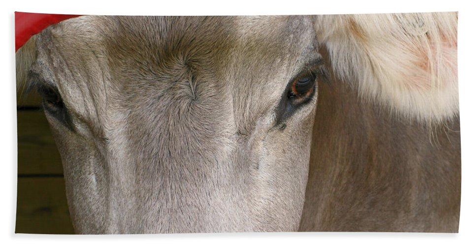 Cow Bath Sheet featuring the photograph Through The Gate by Ann Horn