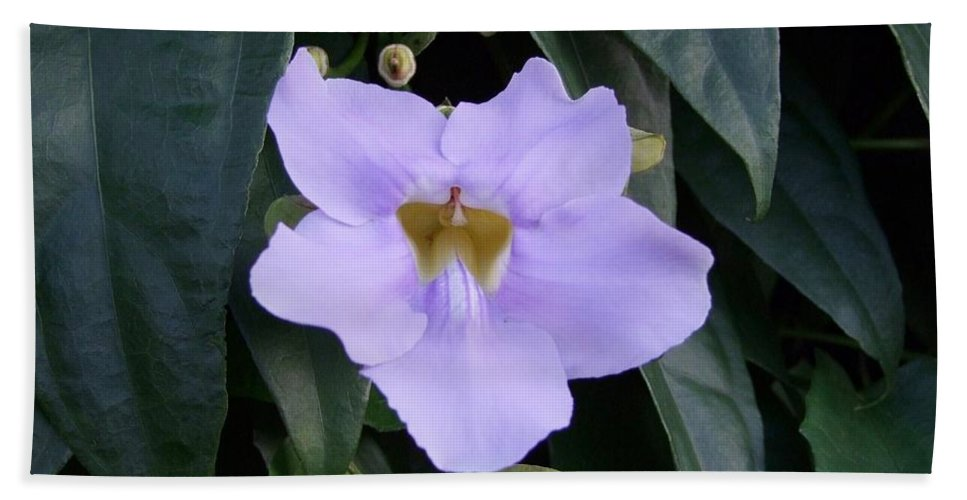 Purple Flowers Hand Towel featuring the photograph Thunbergia by Mary Deal