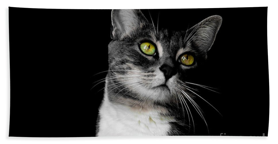 Cat Hand Towel featuring the photograph Ti Min by Bianca Nadeau