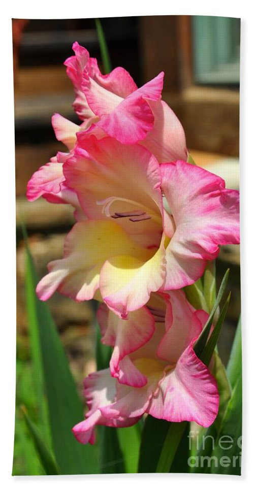 Gladiola Bath Sheet featuring the photograph Tickled Pink by Christina McKinney