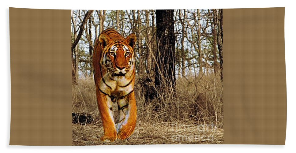 Animals Hand Towel featuring the photograph Tiger 1 by Ben Yassa