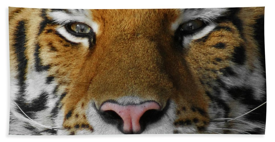 Tiger Bath Sheet featuring the photograph Tiger 1 by Ernie Echols
