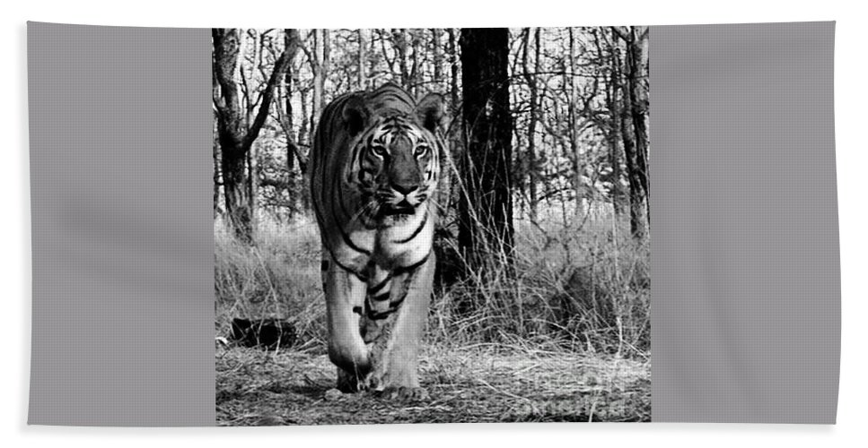 Animals Hand Towel featuring the photograph Tiger 2 by Ben Yassa