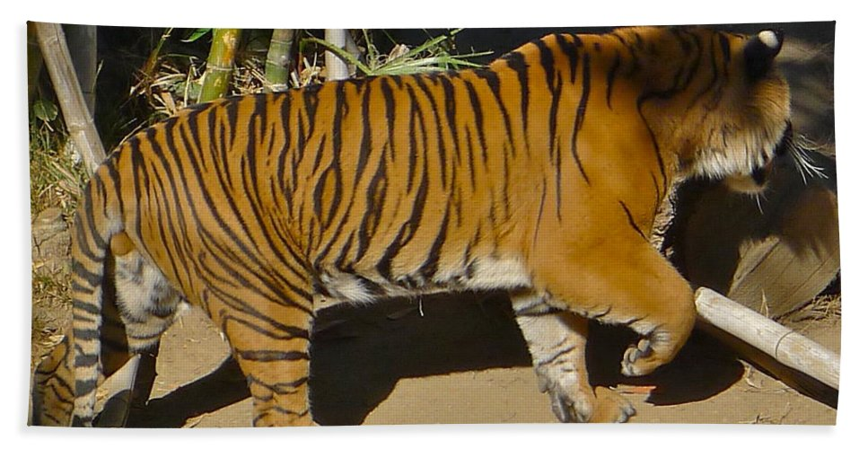 Tiger Hand Towel featuring the photograph Tiger Beat by Denise Mazzocco