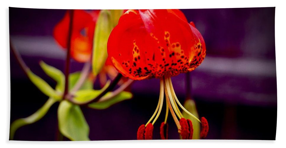 Flower Hand Towel featuring the photograph Tiger Lilly In Repose by David Coleman