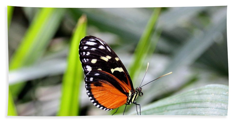 Butterfly Hand Towel featuring the photograph Tiger Longwing Butterfly by Amanda Mohler
