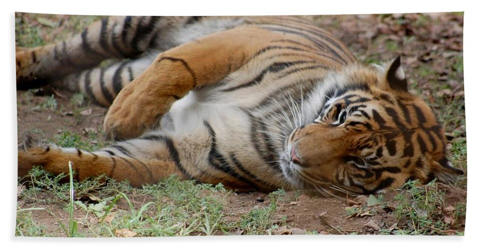 Tiger Resting Bath Sheet featuring the photograph Tiger Resting by Susan Garren