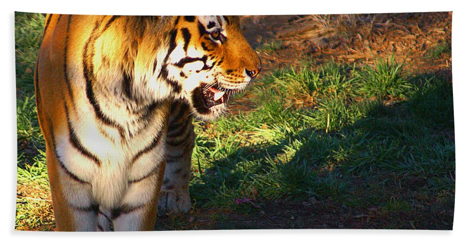 Tiger Hand Towel featuring the photograph Tiger by Robert Edgar