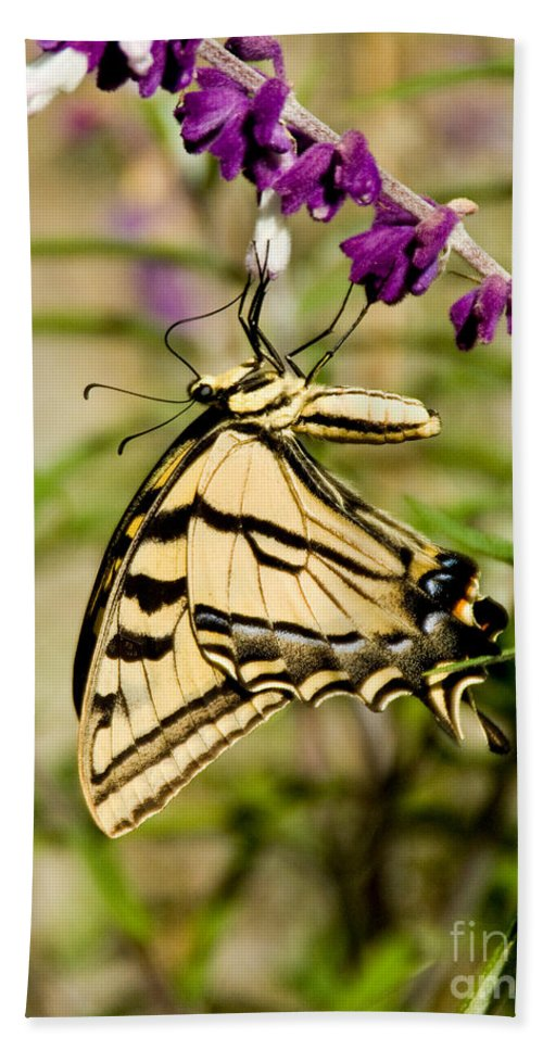 Animal Hand Towel featuring the photograph Tiger Swallowtail Butterfly Feeding by Anthony Mercieca