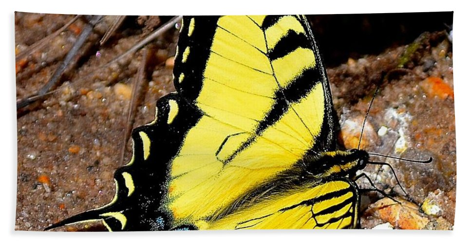 Tiger Bath Sheet featuring the photograph Tiger Swallowtail Butterfly by Tara Potts