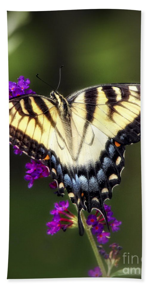 Papilio Glaucus Hand Towel featuring the photograph Tiger Swallowtail Butterfly by Timothy Hacker